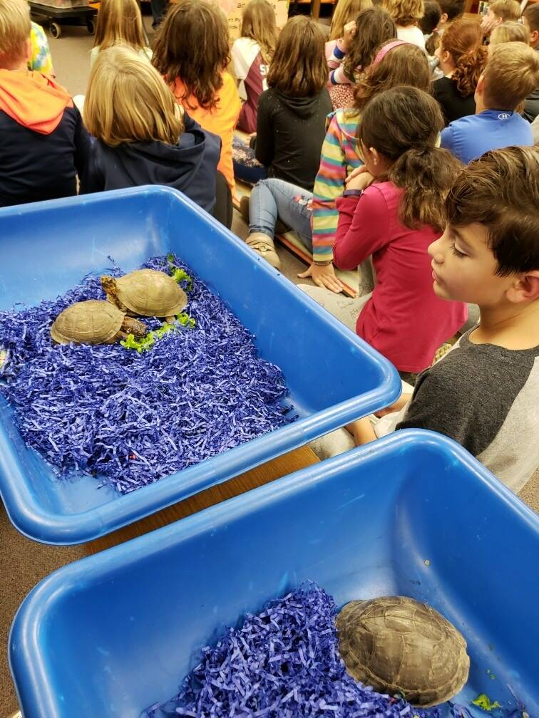 Turtle Lady visits third graders