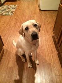 Maryland Best Friend, Darius the Dog